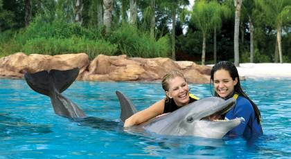 Discovery_Cove_orlando_attractions_american_vacation_living-420x230 - disney