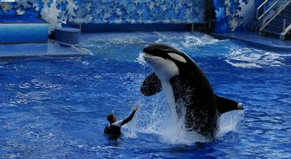 SeaWorld_orlando_attractions_american_vacation_living-420x230 - disney